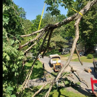 Tree Debris Removal in Chesterfield and Richmond VA