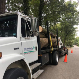 Tree Trimming in Chesterfield and Richmond VA